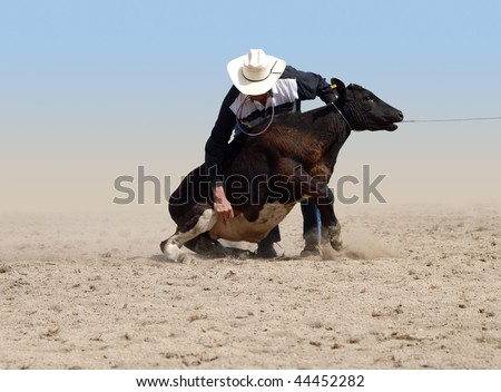 Cowboy about to tie a Calf with a piggin' string isolated with clipping path - stock photo