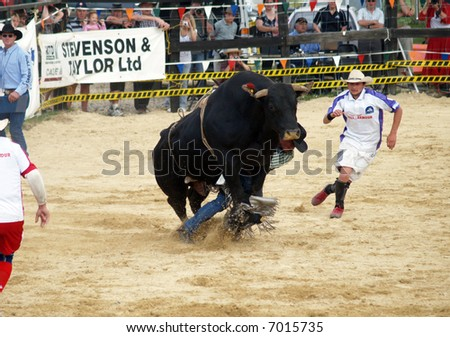 Cowboy being dragged under a big bull - stock photo
