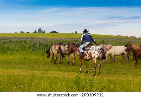 cowboy on a skewbald horse drives herd of horses - stock photo