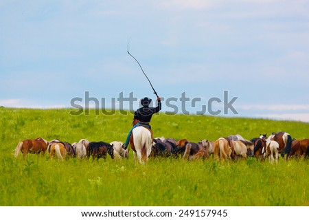 cowboy on  horse drives herd of horses - stock photo