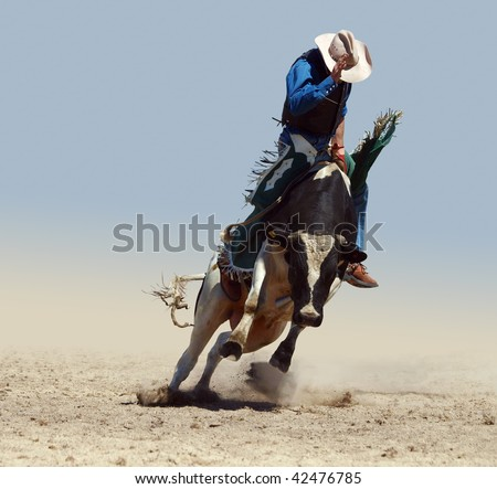 Cowboy Riding a Fresian Bull isolated with clipping path - stock photo