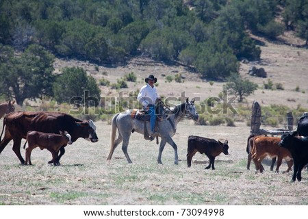 Cowboy riding gray horse pushing cattle.  Remote Cibolla Canyon, Cibola County, New Mexico, USA. - stock photo