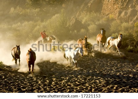 Cowboy rounding up a herd of wild horses - stock photo