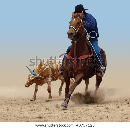 Cowboy Successfully Roping a Steer isolated with clipping path - stock photo
