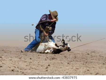 Cowboy Successfully Tying a Calf with a piggin' string isolated with clipping path - stock photo