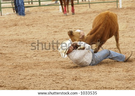 Cowboy vs steer during a rodeo bulldogging event. - stock photo