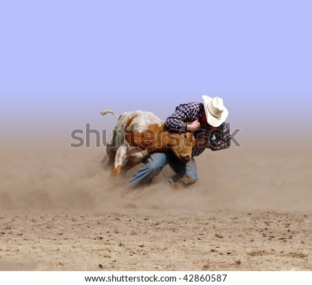 Cowboy Wrestling a Texas Longhorn Steer with clipping path - stock photo