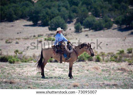 Cowgirl leaning back on her buckskin horse holding the herd. Remote Cibolla Canyon, Cibola County, New Mexico. - stock photo