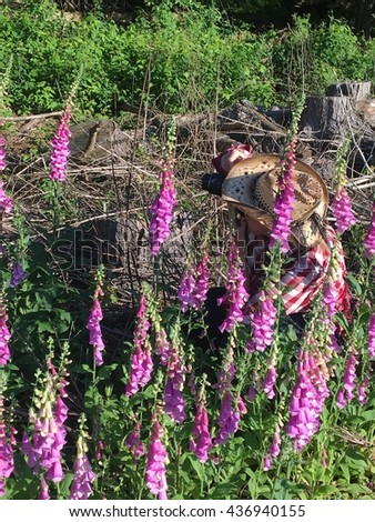 Cowgirl photographer captures foxglove flowers.
