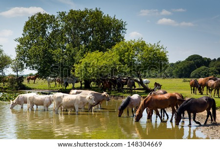 Cows and ponies at lake on a blue sky summer day - stock photo