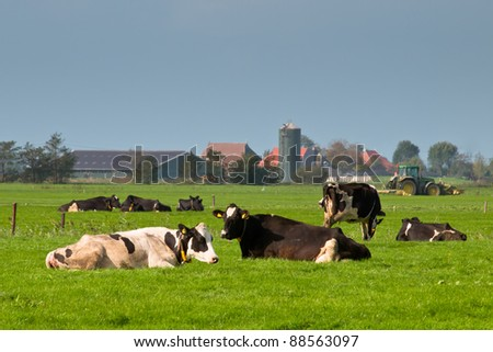 Cows are resting with farm and tractor in backdrop - stock photo