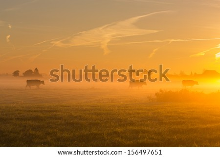 cows at dawn in mist walking with tree in golden light with mist - stock photo