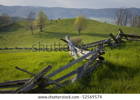 Cows graze in a hillside pasture in the Virginia mountains. - stock photo