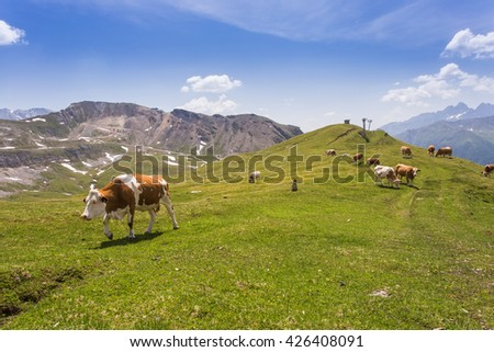 Cows graze in mountains. Cows in meadow in Alps - stock photo