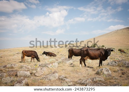 Cows grazing at the foot of a mountain - stock photo