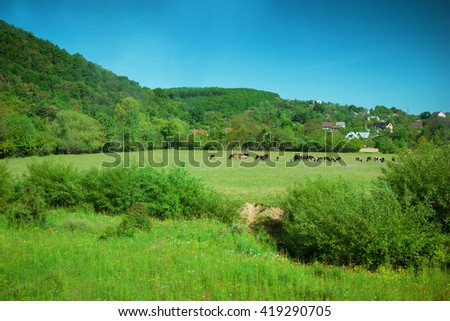Cows grazing in the high mountain valley. Summer landscape - stock photo