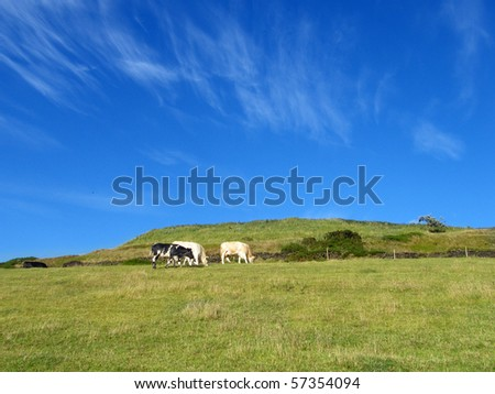 Cows grazing on a farm on a beautiful sunny day. - stock photo