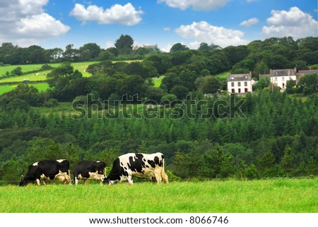 Cows grazing on a green pasture in rural Brittany, France - stock photo
