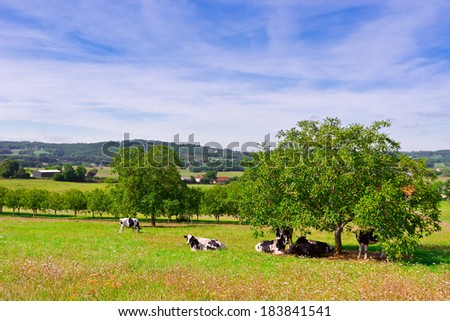 Cows Grazing on Alpine Meadows in France - stock photo