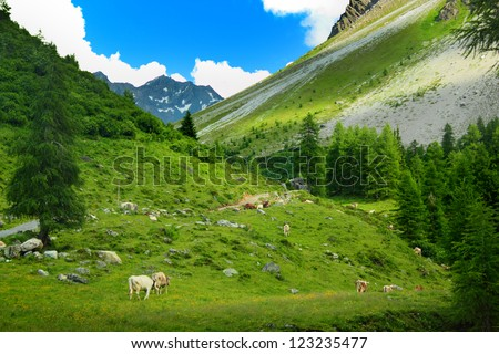 Cows grazing on pasture in mountains at Sertig Dorfli, Davos, Switzerland