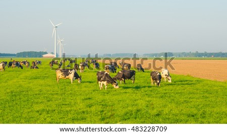Cows in a meadow in summer