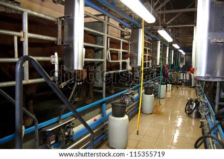 Cows in milking machine on farm - stock photo