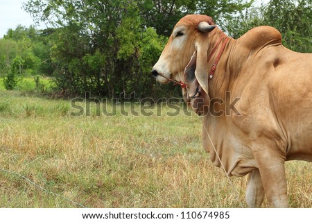 Cows in nature - stock photo