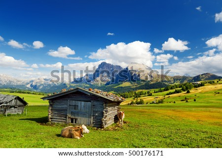 Cows in Seiser Alm, the largest high altitude Alpine meadow in Europe, stunning rocky mountains on the background. South Tyrol province of Italy, Dolomites.
