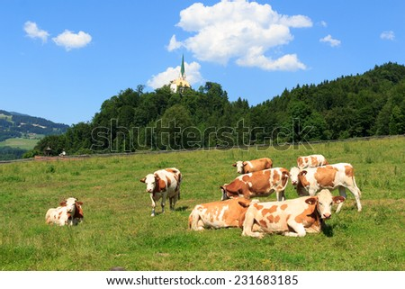 Cows in the Alps with church in the background - stock photo