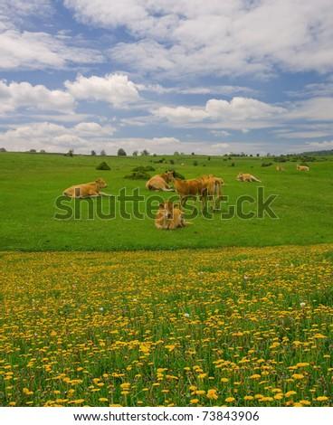 Cows in the mountains of Urbasa, Navarra - stock photo