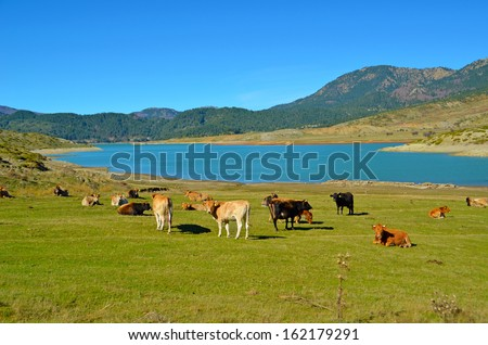 cows lake mountains green grass beautiful colors - stock photo
