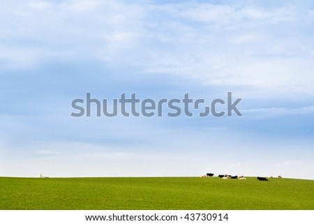 cows lying in the meadow under blue sky with a little village church at the background. this photo truly expresses the totally unspoilt nature of northern ireland - stock photo
