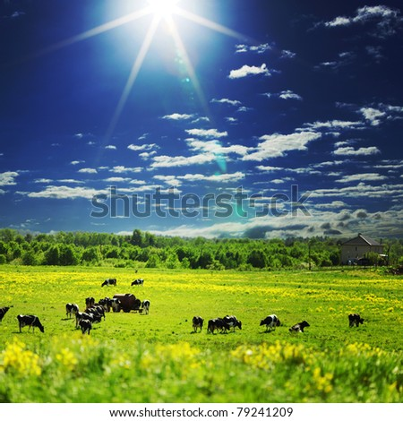 cows on a green field - stock photo