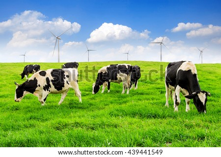 Cows on a green field with turbine and blue sky. - stock photo