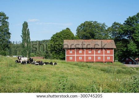 Cows on a meadow