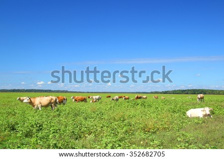 Cows on farm - stock photo