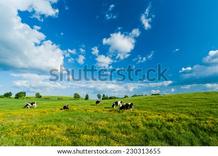 Cows on green field with blue sky - stock photo