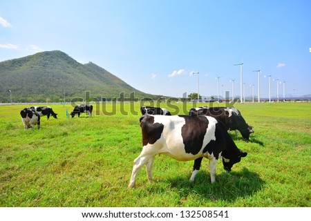 Cows on Green Fields and Wind Turbines - stock photo