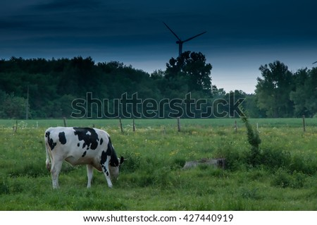 cows on green meadow - stock photo