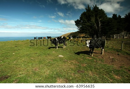 cows on green meadow against blue  sky - stock photo
