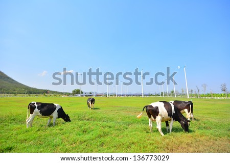 Cows on Green Meadow and Wind Turbines - stock photo