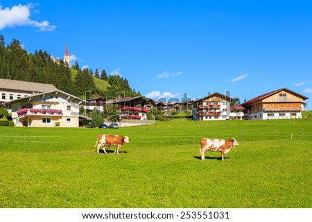 Cows on green meadow in Strassen alpine village, Austrian Alps - stock photo