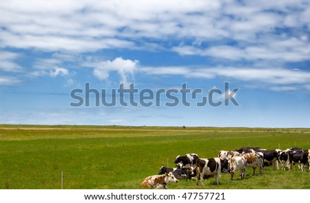 cows on pasture under blue sky - stock photo
