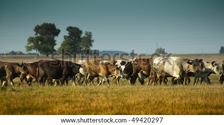 Cows on the farm. - stock photo