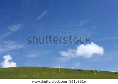 cows on the green meadow against a blue sky. - stock photo