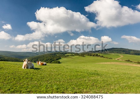 Cows on the green pasture - amazing summer landscape in Czech Republic, Europe - stock photo