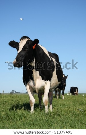 Cows standing in green pasture - stock photo