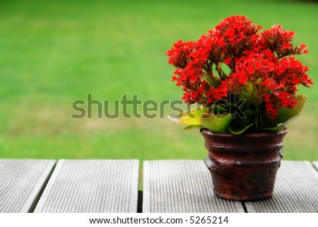 Cozy garden with a wooden table and red flower on it - stock photo