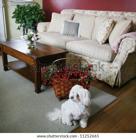 cozy living room with dog in foreground