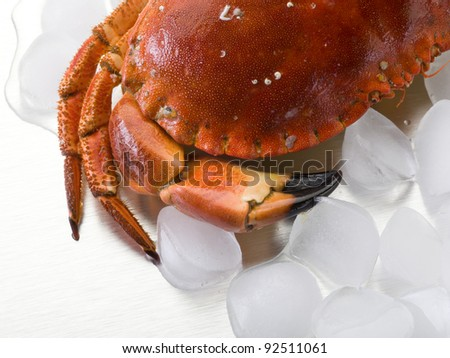crab and  ice over steel background - stock photo